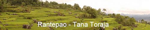 paddy field in Tana Toraja - South Sulawesi - Indonesia