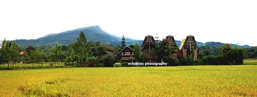 Sawah dan rumah tongkonan, Tana Toraja