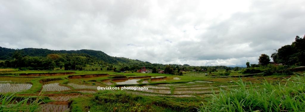 Sawah di Sumatra Barat