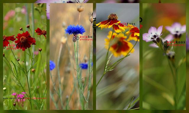 Meadow Grass Flower